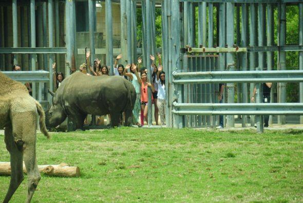 Las chicas fueron sorprendidas con un paseo al Lion Country Safari para...