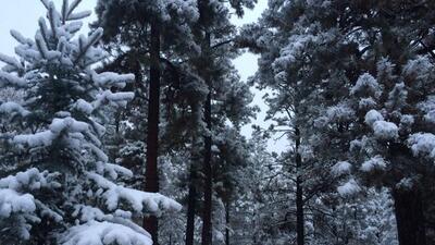 Nieve en Arizona