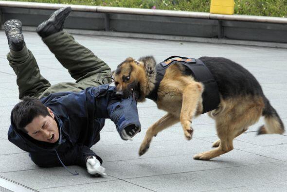 El propietario de un perro que es encontrado responsable de las heridas...