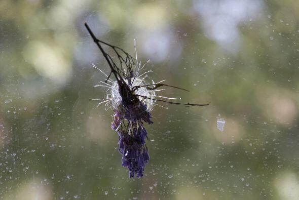 Imagen de una ramo de flores justo en el orifio hecho por una bala.