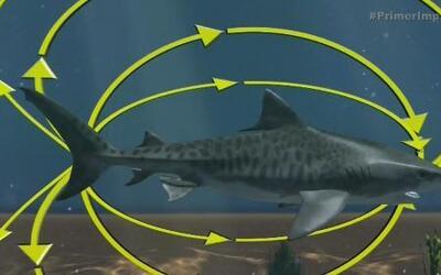 Esta pulsera espanta a los tiburones