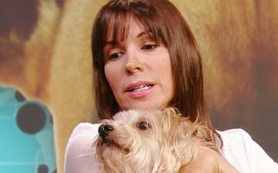 Conviértete en su mejor amigo: Descubre lo que no le gusta a tu perro