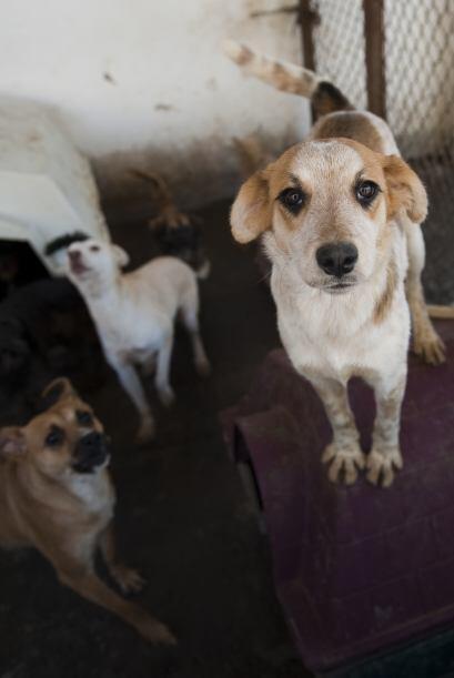 En muchos de estos lugares, los animales sufren el maltrato físico e inc...