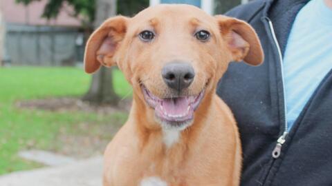 Nueve perritos fueron rescatados por la policía de Irvine y estarán disp...