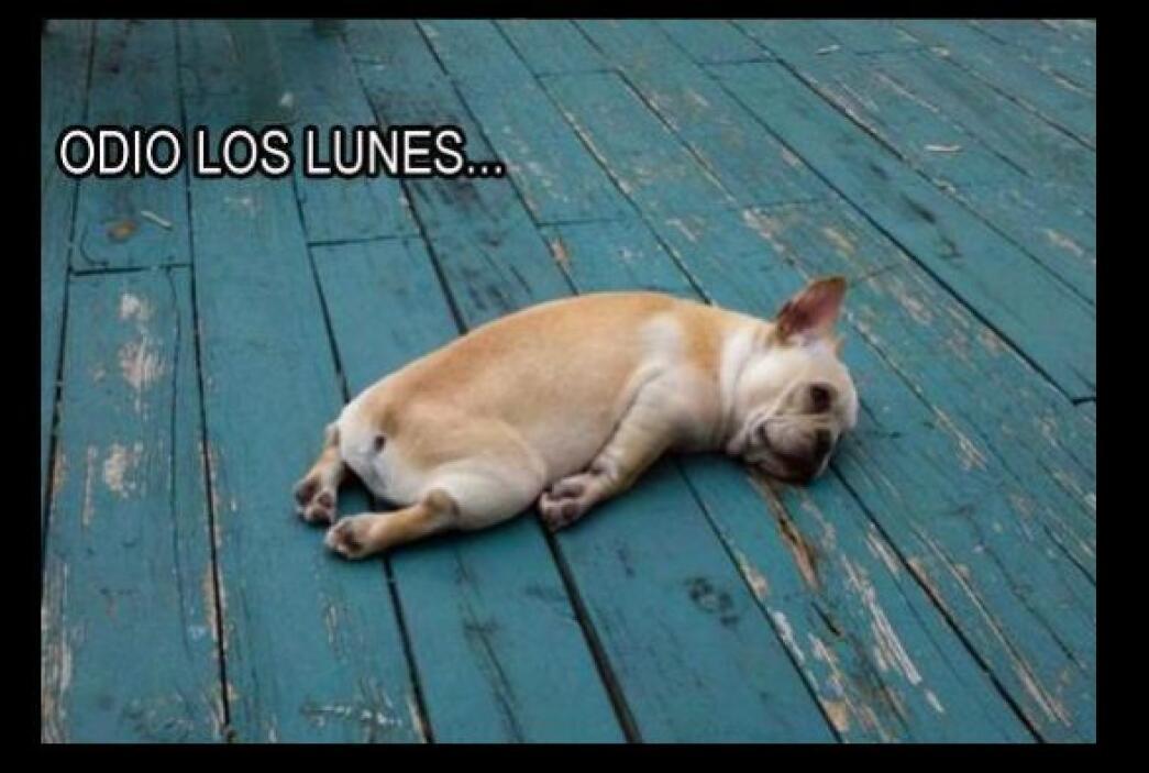 #UnOdioEternoA... Los Lunes.
