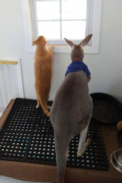 Entre sus mascotas está Larry, un bonito gato que es 'Best Friend' de Bo...