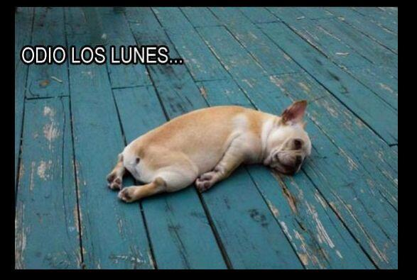 #UnOdioEternoA... Los Lunes.&n...