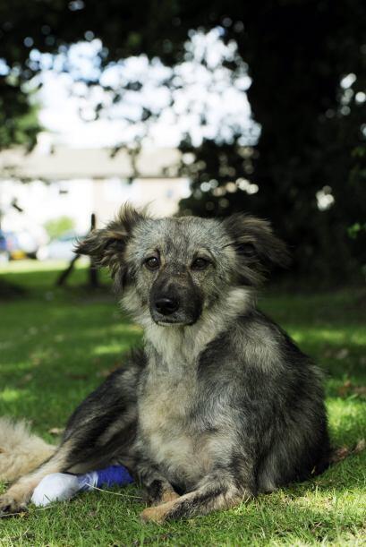 Otro caso del que tenemos información es el de 'Glory', un perro adoptad...