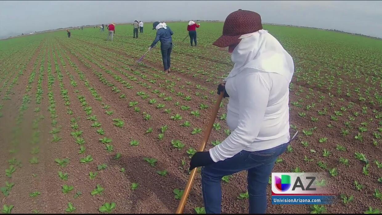 Subestimada, la fuerza laboral hispana en el país