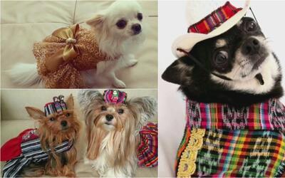 ¿Le comprarías un vestido de alta costura a tu mascota?