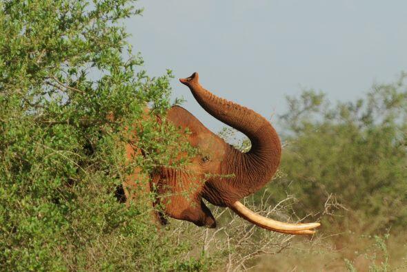 La organización en pro de esta especie tiene como objetivo combat...
