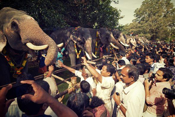 Miles de personas alimentaron a estos majestuosos animales como parte de...