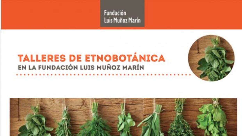Uso de plantas en remedios preventivos y curativos. Aprenderás a prepara...
