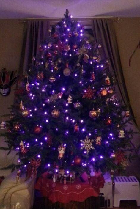 La Familia Amador Limón ya tiene su arbolito listo para esta navidad.