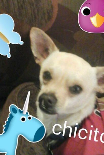 """""""Chicito"""" también se suma al club de las mascotas famosas de Margarito...."""