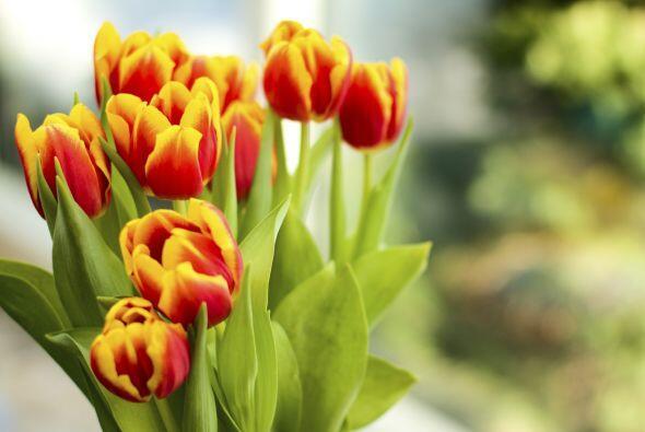10) Tulipanes. Para Jenkins-Sutton, los clásicos tulipanes, que se ofert...