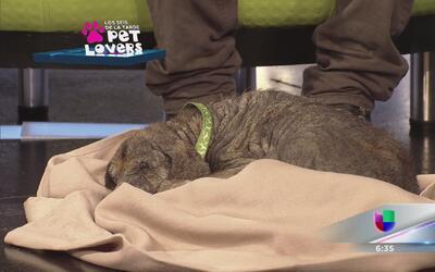 Rescatan perrito en el residencial Quintana