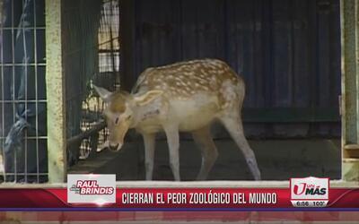 Cierran el peor zoológico del mundo