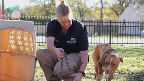 Juez determinó que perro y caballo rescatados de un hogar al sureste de...