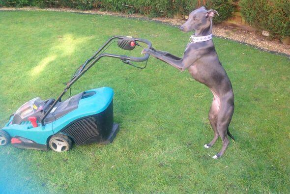 Un día le toca hacer los trabajos de jardinería de la casa.
