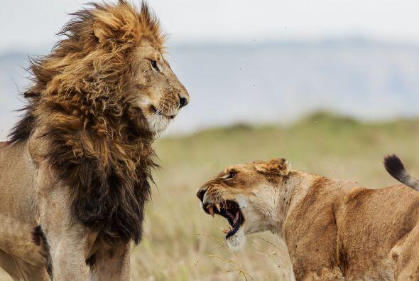 Ellos dos comenzaron a pelear.