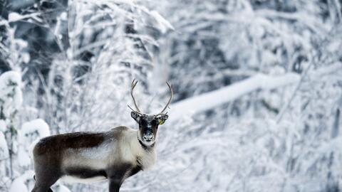 Biodiversidad GettyImages-107732508.jpg