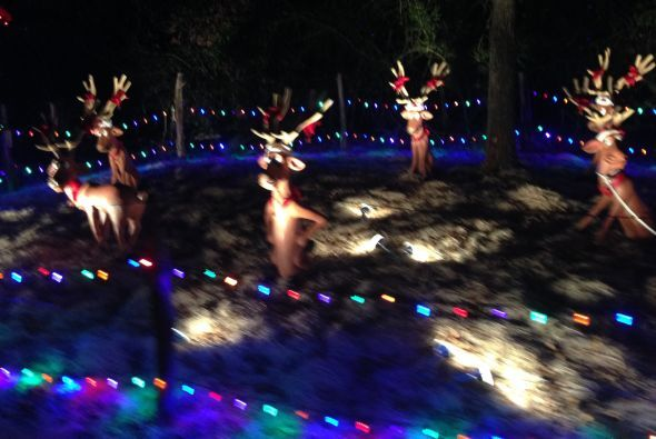 ¡Los renos esperando su trineo!
