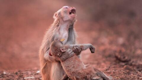 La madre mono con su cría en brazos