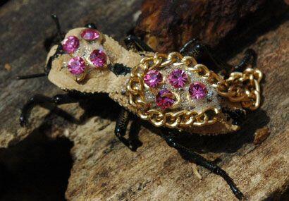 Los famosos 'maquech' son un tipo de escarabajo que solo se encuentra en...