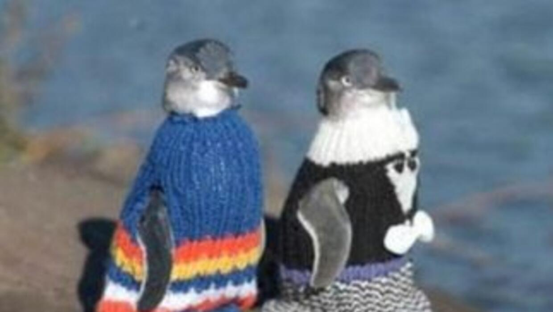 Abrigan a pingüinos conta la contaminación. Foto:Fundación de Phillip I...