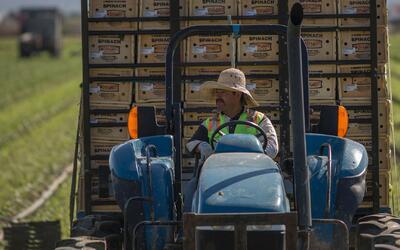 Agricultores mexicanos encuentran en los inmigrantes deportados una fuen...