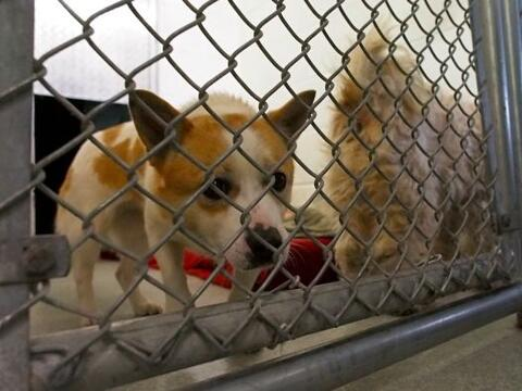 La asociación Humane Society International (HSI) rescató a...