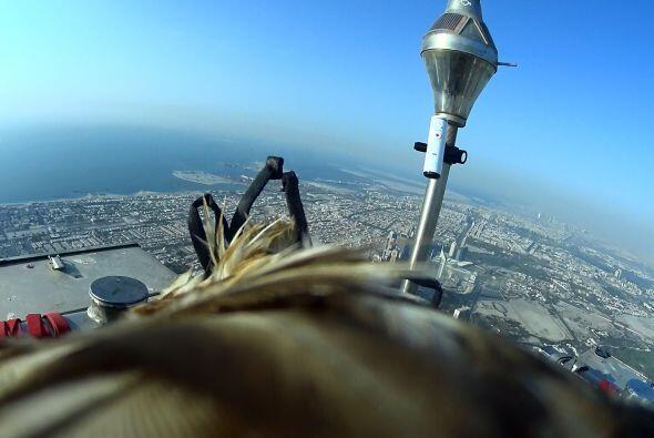 Este animal realizó el vuelo más alto jamás grabado...