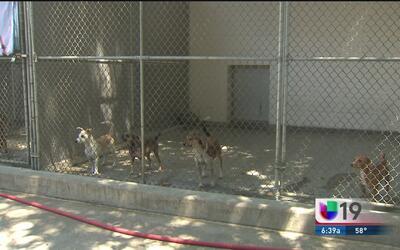 ¡Ven y captura nuevos pokémones en un refugio de animales en Sacramento!