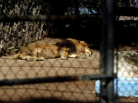 Recordemos que en 1993 las autoridades le decomisaron un zoológic...
