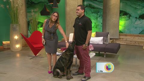 Boricua entra en exclusivo grupo de entrenadores de perros