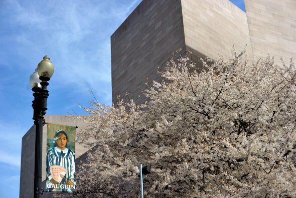 La Galeria Nacional de Arte se financia con dinero público y privado. El...