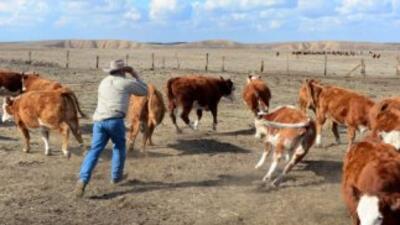 Muchos granjeros están ofreciendo un salario un poco más alto, pues hay...