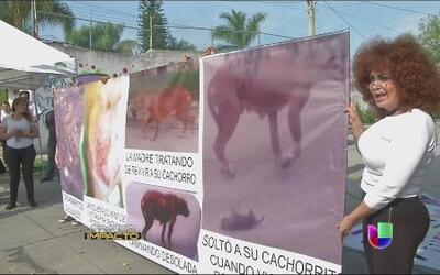 Indignación en México por quema de ocho cachorros vivos