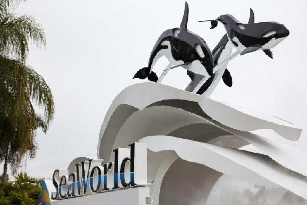 Tilikum se reintegró al espectáculos 'Believe' con ballenas asesinas.