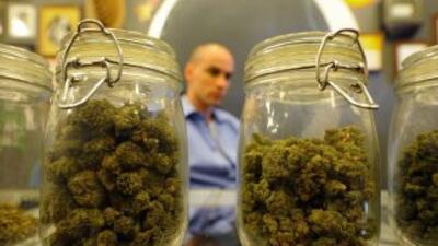 Marihuana logra el sí medicinal en ciudades de California y en Arizona