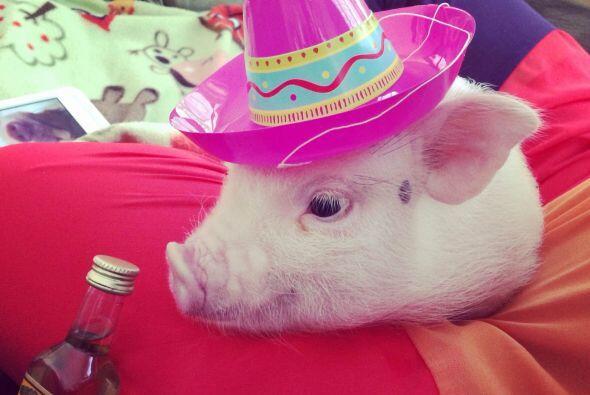 Hasta un sombrero mexicano y el clásico tequila.