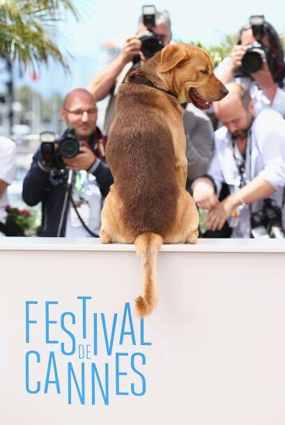 La película hace conciencia para los millones de perros que son a...