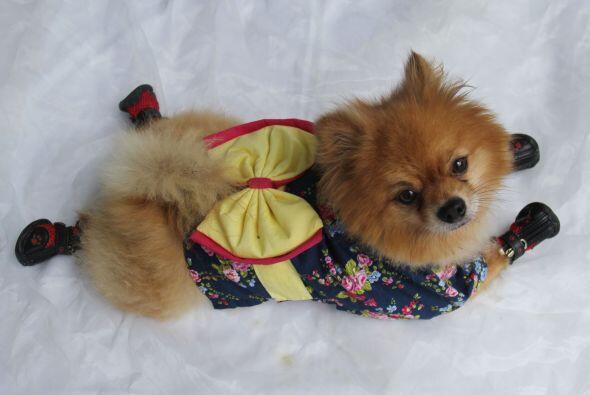 Los amantes de los perritos usan estos modelitos para que sus mascotas s...
