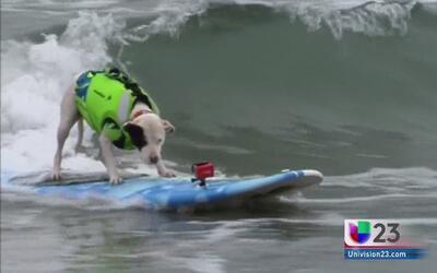 ¡Disfrutate estos perritos surfistas!