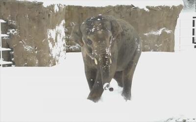 El videíto: así reaccionan estos animales al ver nieve por primera vez e...