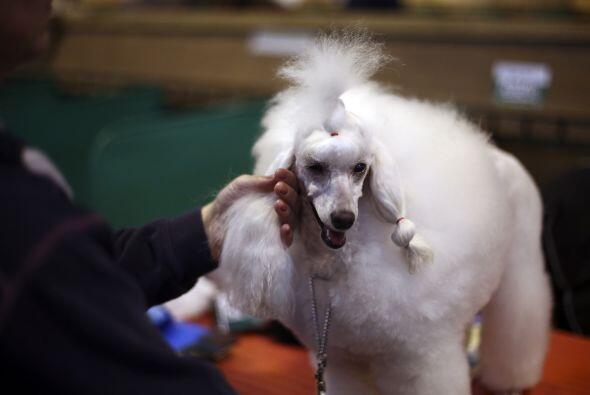 Si prefieres las coletas, puedes copiar el estilo de este can.
