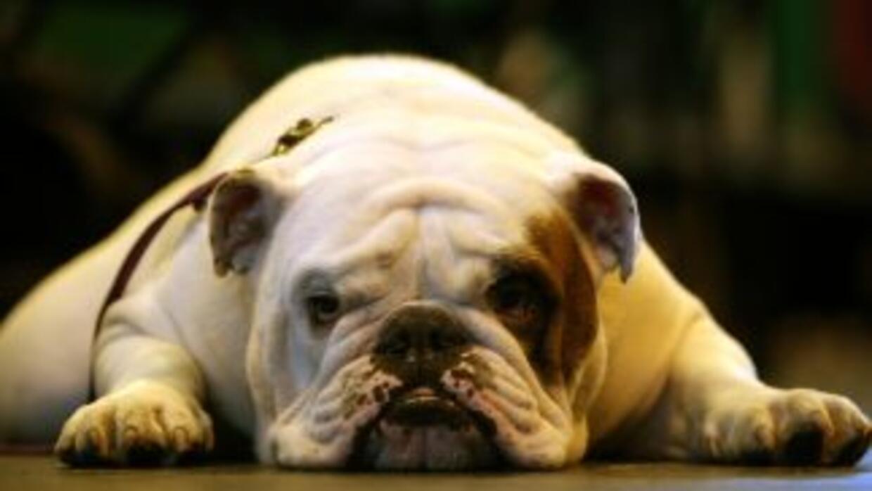 """""""Lo único que nos preocupa es nuestro perro, Bronx"""", afirmó el dueño del..."""