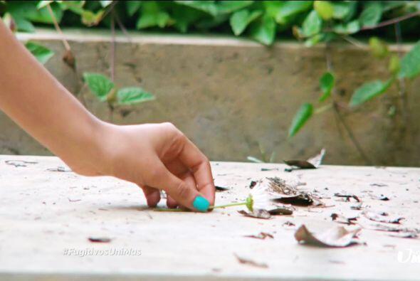 Sobre su tumba decidió colocar una flor con la 'Esperanza' de que no cre...