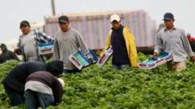 Según una encuesta, la mayoría de latinos en California apoyan que los i...